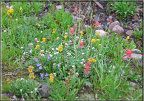a medley of wildflowers
