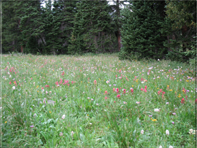 meadow with wildflowers
